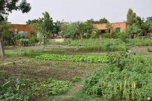 Jardins de l'association La Saisonnière à Ouagadougou
